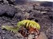 Kilauea054a