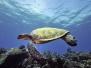 Underwater Kauai