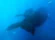 Underwater Whale